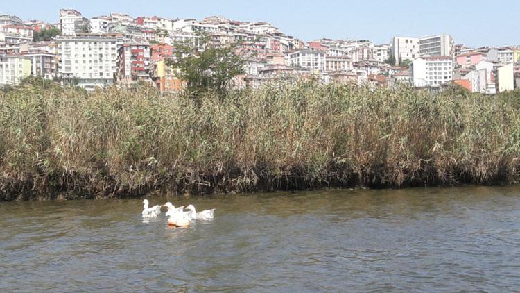 les iles de la corne d'or à Istanbul Turquie