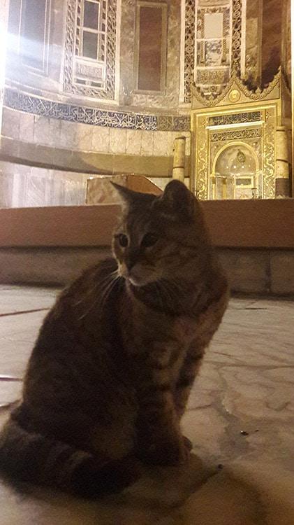 Gli, le chat célèbre de Sainte-Sophie à Istanbul Turquie