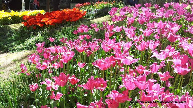 parc gulhane Istanbul Festival de la Tulipe