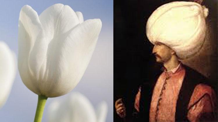 le tulipan ou tulipe dont le nom vient du turban porté par le sultan ottoman Soliman le Magnifique