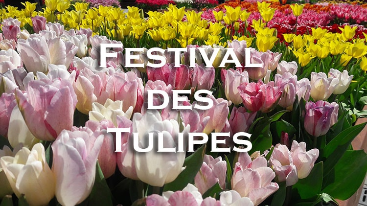 festival de la tulipe Istanbul