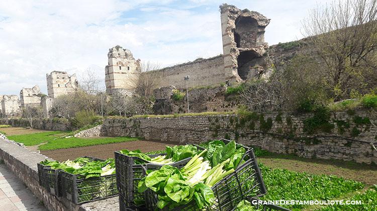 murailles de constantinople et ses jardins familiaux partagés, culture des épinards