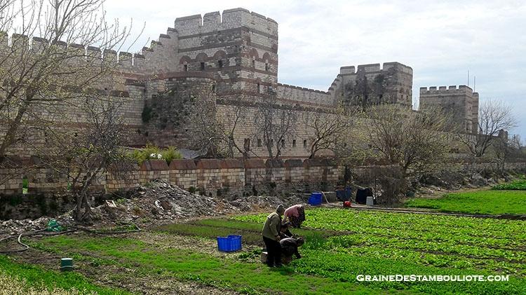 murailles de constantinople et paysans cultivant dans les jardins familiaux partagés