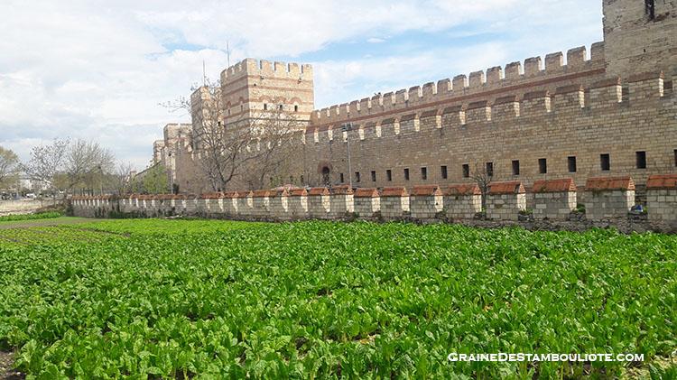 murailles de constantinople près de la porte de Belgrade et ses jardins familiaux partagés