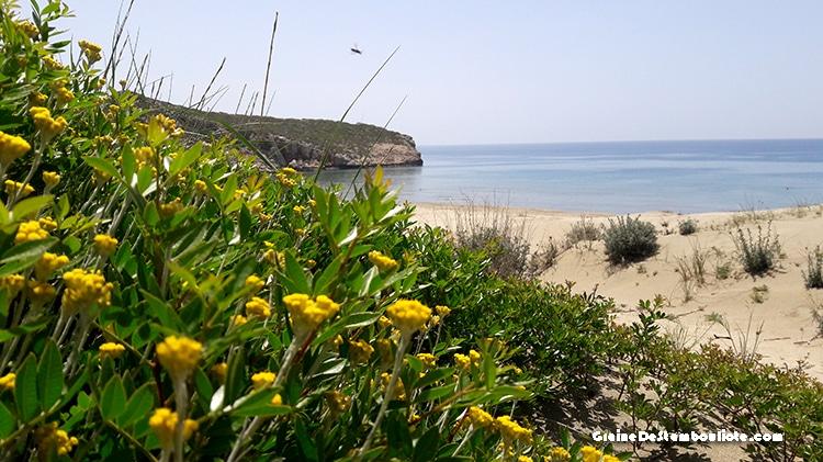 plage de patara, site de ponte des tortues marines, sur la côte turquoise de Turquie