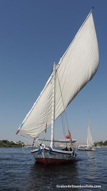 balade en felouque, croisière en bateau traditionnel à la voile, sur le Nil, Assouan, Haute Egypte